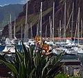 Strelitzia in the Marina of Quinta do Lorde. Madeira, Portugal.jpg