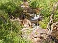 Stuorrâävži bäck med blommor.jpg