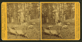 Successful Hunters dressing Elk, by I. W. Marshall.png