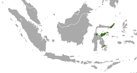 Sulawesi Palm Civet area.png