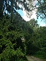 Sunday Drive July 2016 - panoramio (3).jpg