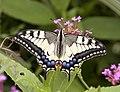 Swallowtail Butterfly (3780825971).jpg
