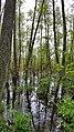 Swamp Reflection.jpg
