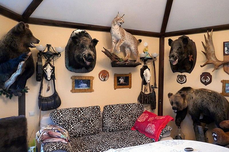 File:Taxidermied animals in Novgorod Oblast.jpg