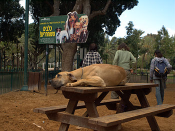 English: A dog park in Gan Meir park in Tel Av...