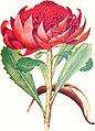 The Australian flora in applied art (1915) (14784167192).jpg