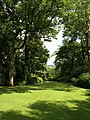 The Glade, Dartington Hall Gardens - geograph.org.uk - 1401688.jpg