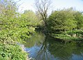 The River Cam - geograph.org.uk - 768473.jpg