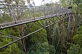 The Treetop Walk - Enjoying the forest from 30m high (19385320645).jpg