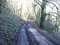 The Warden's Way - geograph.org.uk - 1652386.jpg