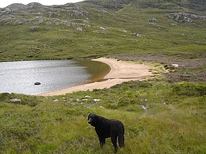 English: The beach at Loch a' Bhealaich. Far f...