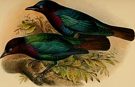 The birds of Africa, comprising all the species which occur in the Ethiopian region (1896) (14732355166).jpg