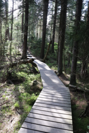 The path to the Torfhausmoor in the Oberharz (BR 006).png