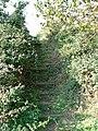 The steep embankment - geograph.org.uk - 247733.jpg