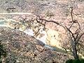 Thirsty tree at Kuntala falls.jpg