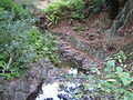 Tilden botanical garden 6.JPG