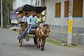 Tourists Ride Tonga - Murshidabad 2017-03-28 5964.JPG
