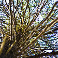 Tree (2680040159).jpg