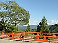 Trees - Kurama-dera - Kyoto - DSC06694.JPG