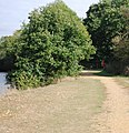 Trees by the riverside, Haysden Country Park - geograph.org.uk - 1527359.jpg