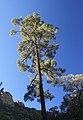 UPPER FLUX CANYON, Patagonia Hills, scc, az (9-25-10) -10 (5023932080).jpg