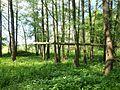 Uferbewaldung-Großer Rötelseeweiher.jpg