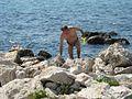 Umag wild coast of the Adriatic, but a lovely underwater. Dzikie wybrzeże Adriatyku, ale tu pięknie pod wodą. - panoramio.jpg