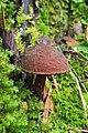 Unidentified Fungus 5897.jpg