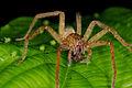 Unknown spider (14332534888).jpg