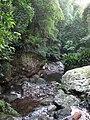 Upper Minnamurra River flowing through the Rainforest.jpg