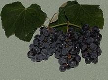 Grappoli di uva fragola
