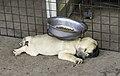 Vientiane - Pet shop - 0001 (15212027941).jpg