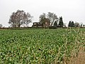 View across sugar beet crop - geograph.org.uk - 1060646.jpg