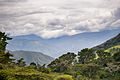View from the coffee farm.jpg