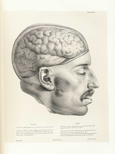 File:Vimont Traite de Phrenologie 082.jpg