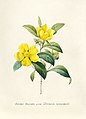 Vintage Flower illustration by Pierre-Joseph Redouté, digitally enhanced by rawpixel 95.jpg