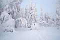 Vitberget-kalvtrask-jan2013.jpg