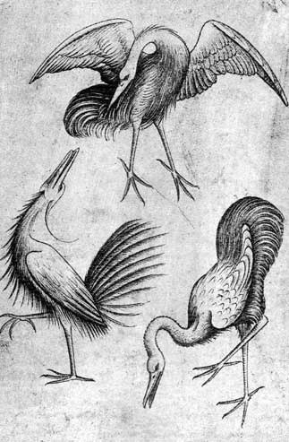 Woodcut of three long-legged and long-necked birds