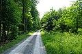 Waldweg im Pfahlhofwald - geo.hlipp.de - 11389.jpg