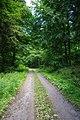 Waldweg im Rossert - geo.hlipp.de - 37760.jpg