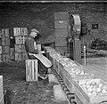 Wegen van kisten met appels op kwekerij de Olmenhorst in Abbenes, Bestanddeelnr 254-5342.jpg