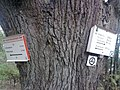 Wegweiser an den Glockensteinen (Steigerthal 0,9 km).jpg