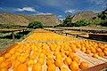 Weltevrede Farm - Prince Albert, South Africa (3919221778).jpg