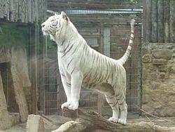 Todo sobre el tigre yahoo dating. Dating for one night.