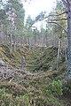 Whiteash Forest - geograph.org.uk - 265505.jpg