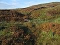 Whiteside Hill - geograph.org.uk - 581725.jpg