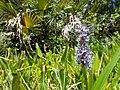 Wild Flowers - panoramio (12).jpg