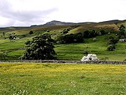 Wild Boar Fell, seen from Mallerstang in June, with wild flowers in the hay meadows