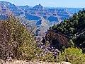 Wildflowers, Grand Canyon 9-15 (21907583160).jpg