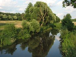 Wilga przepływająca przez wieś Kamionka.jpg